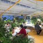 Thiết kế văn phòng xanh tạo không gian làm việc hiệu quả